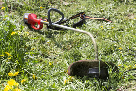 electric trimmer: Electric trimmer lies on grass on a sunny day