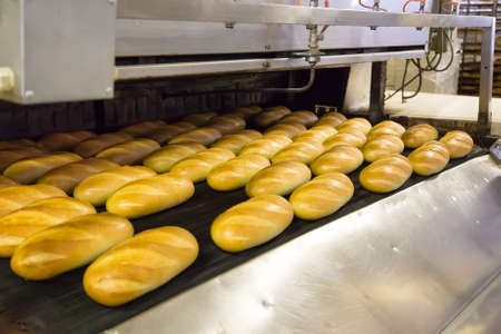baking tray: Baked Breads on production line at bakery