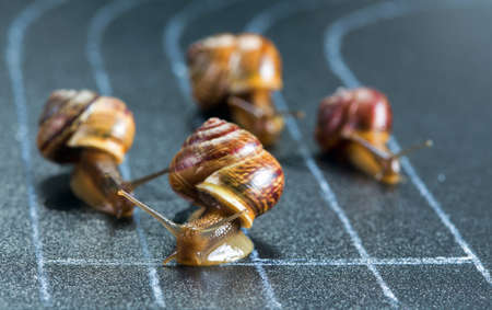 Snails on the athletic track moves the finish line Banco de Imagens - 62964072