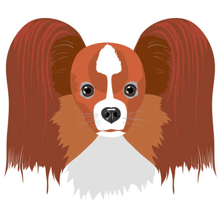 Papillon dog isolated on white background. Vector illustration
