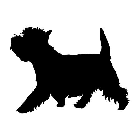 West Highland White Terrier su uno sfondo bianco. Silhouette. Illustrazione vettoriale