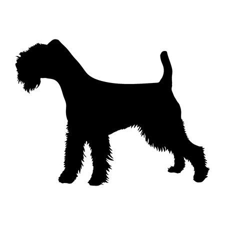 Soft-Coated Wheaten Terrier on a white background. Silhouette. Vector illustration