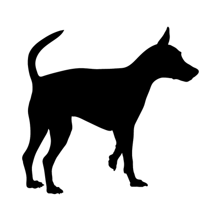 Silhouette of a Miniature Pinscher on a white background. Vector illustration