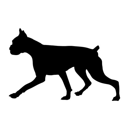 Silhouette of a Boxer breed dog on a white background. Vector illustration