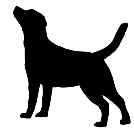 Race de chien Labrador Retriever sur fond blanc. Silhouette. Illustration vectorielle