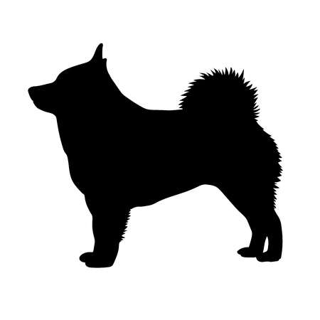 Dog Schipperke breed on a white background. Silhouette.