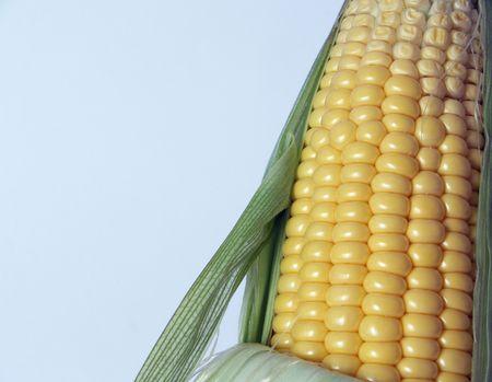 agricultura: mazorca Stock Photo