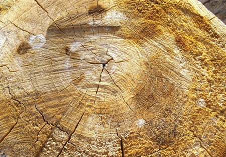 tree trunk Stock Photo - 4261759