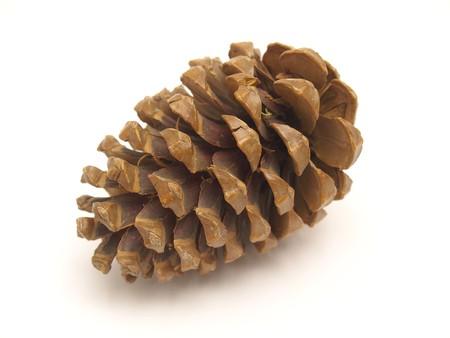 snow cone:  pine cones
