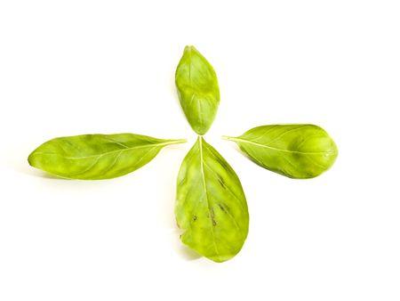 basil leaves photo