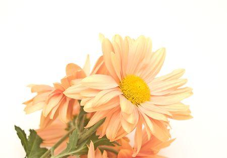 close-up margaritas photo