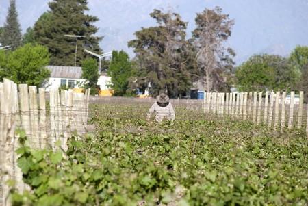 vineyard in Mendoza, Argentina Stock Photo