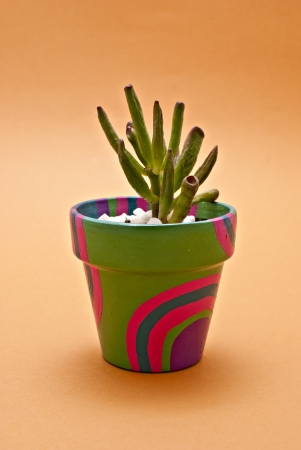 Cactus in pots photo