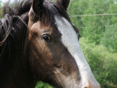 appeal: Clydesdale Appeal