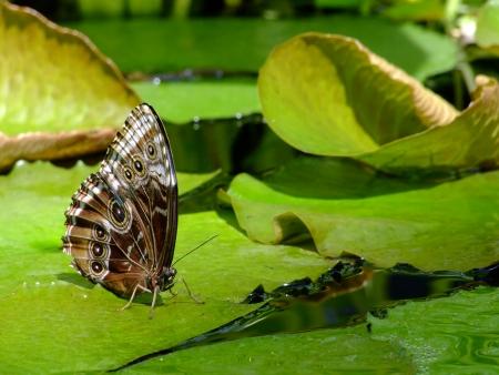 나비 원더