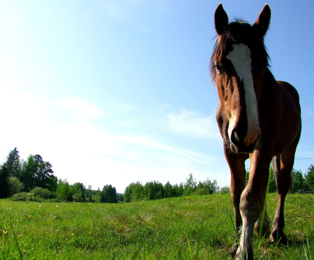 Horse in Field Banco de Imagens