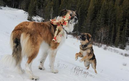 pet photography: Christmas Pet Photography for Christmas Card