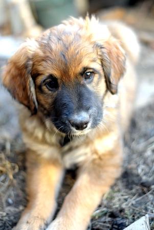 Puppy at Rest Standard-Bild - 57985975