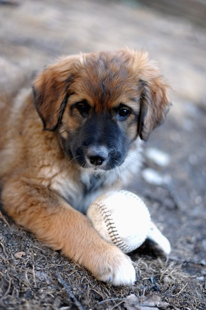 berger: Puppy plays with a Base Ball