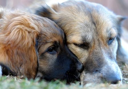 Ltere Hunde und neuen Welpen Standard-Bild - 58075446