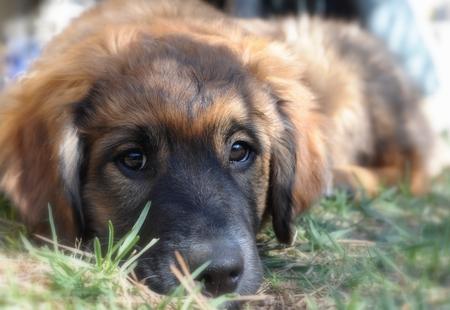 Puppy at Rest Standard-Bild - 58075447