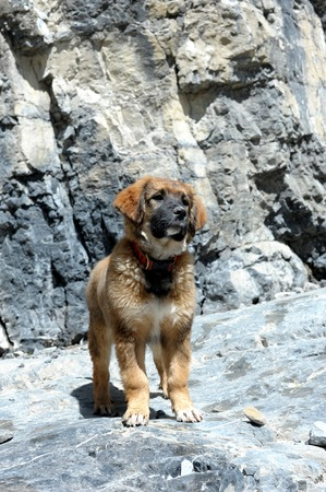 berger: Puppy on First Hike