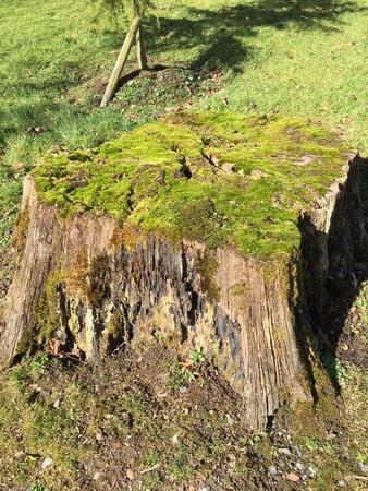 Tree stomp with moss cushion
