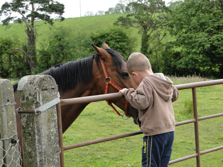 Boy petting a horse