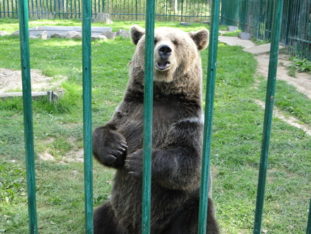 Bear closed in zoo