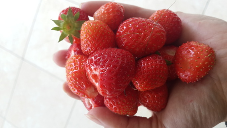 A handful of fresh organic strawberries Reklamní fotografie