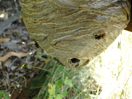 Closeup view of wasps nest