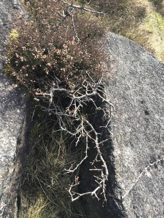 Dry bush in between rocks