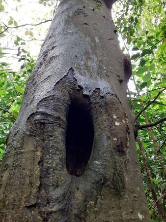 Tree hollow, natural home