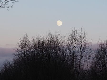 Full moon rising over the darkening forest