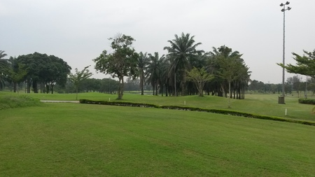 Grasses and trees are the major greeneries that beautify the landscape of a golf course