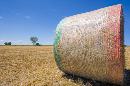 Photo of a bale of wheat in a field on a summer day