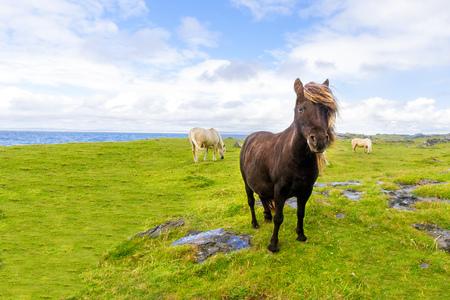 Pony free Irish beach