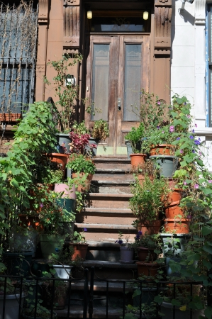 brownstone: Stairs with grass in a Brownstone
