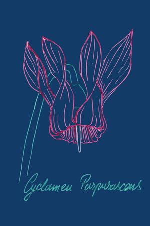 cyclamen: Flower modern poster - cyclamen purpurascens
