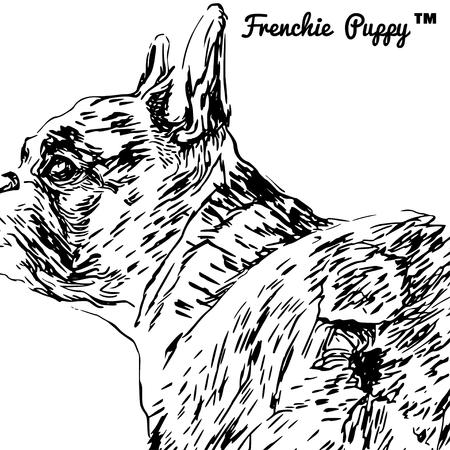 backside: Backside portrait of a French bulldog