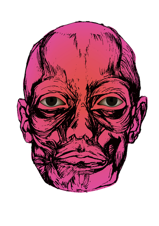 Human corpse head with eyes open, muscles are drawn by hand Illustration