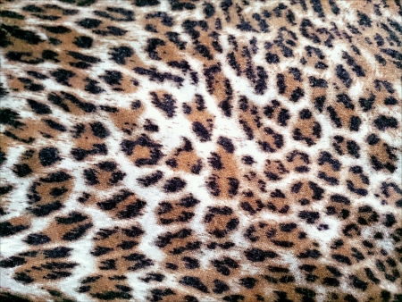 print: Leopard Print Texture.