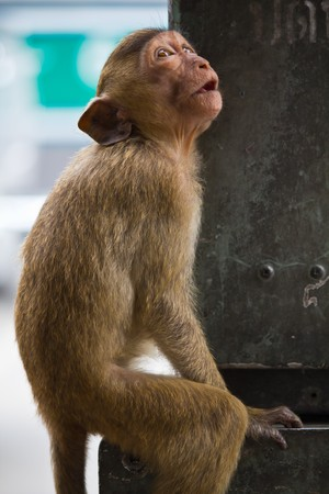 Monkey Stock Photo - 7530558