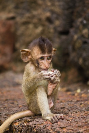 Monkey in Lopburi of Thailand Stock Photo - 7591536
