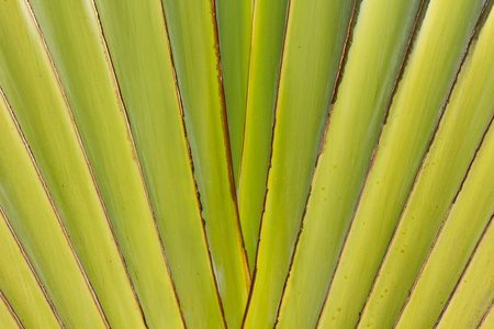 Abstract texture of center of banana tree stems Stock Photo - 8786782