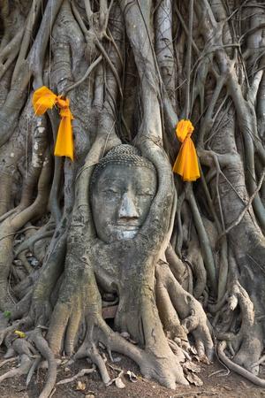 stone buddha: Head of The Sand Stone Buddha Image in wat mahathat temple, Ayutthaya Thailand