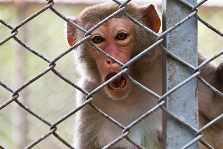 sad monkey in the cage of zoo photo