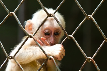 Sad little monkey in the cage of zoo Stock Photo