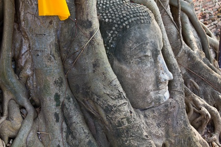 Head of The Sand Stone Buddha Image in wat mahathat temple, Ayutthaya Thailand Stock Photo - 9350928