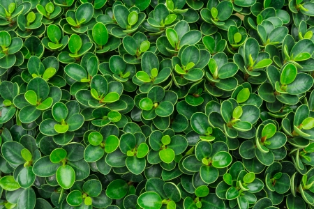 Green leaf pattern for background in garden Stock Photo